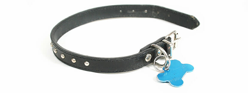 Dog Collar with tag