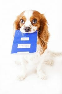 Small Dog with Passport in his mouth