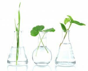 plant cuttings in beakers with water