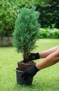 Plant in plastic pot