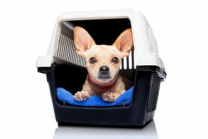 Small dog in pet carrier