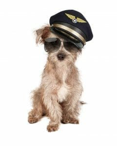 Dog wearing Pilots hat