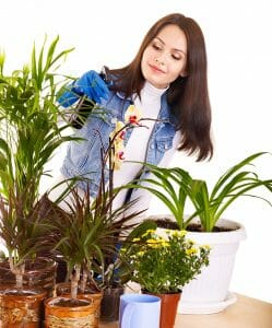 woman moving her potted plants inside her house