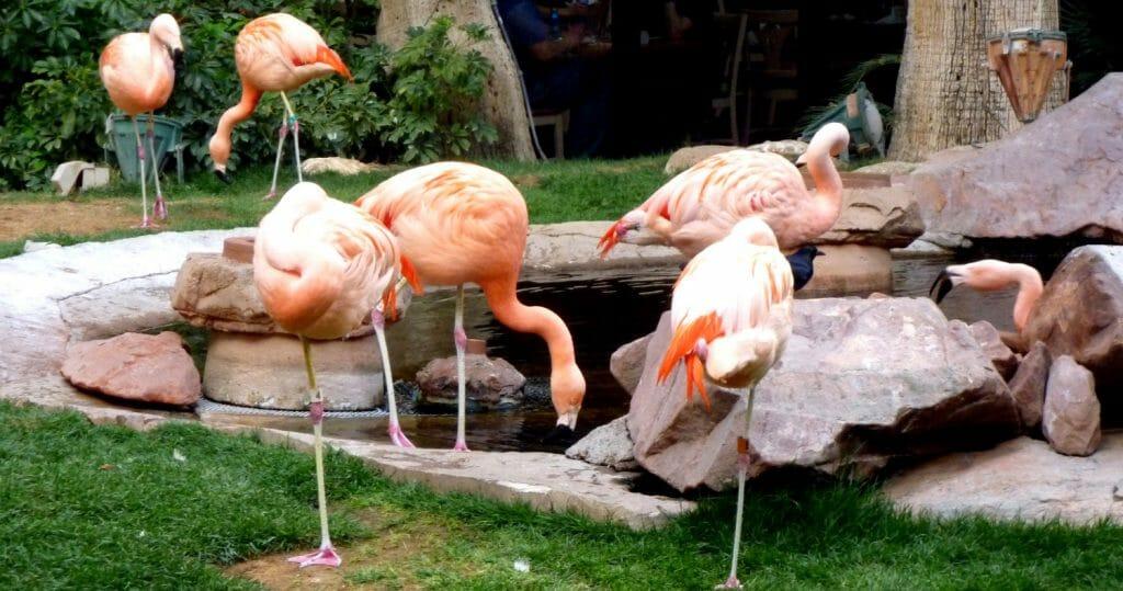 Wildlife habitat at the Flamingo hotel in Las Vegas